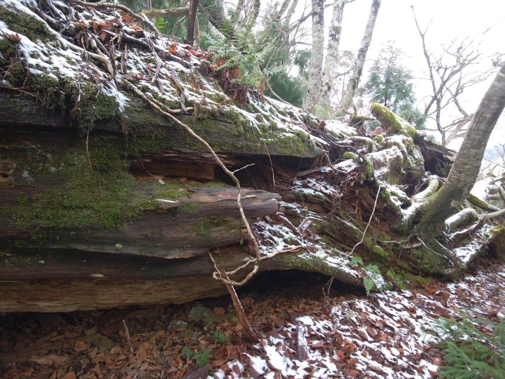 苔と雪ってのもなかなかグッドで、これも一眼で撮影したかった