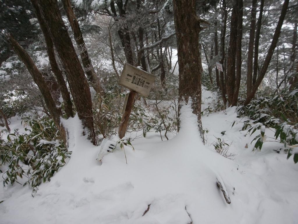 分岐まで来ました。三の谷登山口へ下っていきます