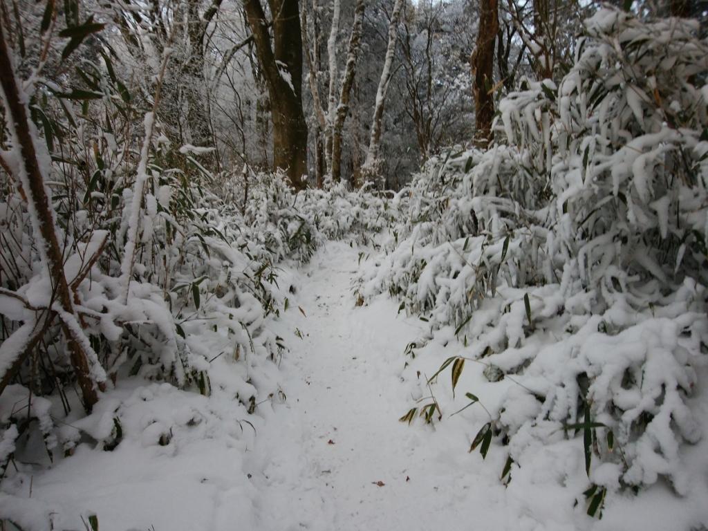 尾根に出ると雪の量が一気に増えた