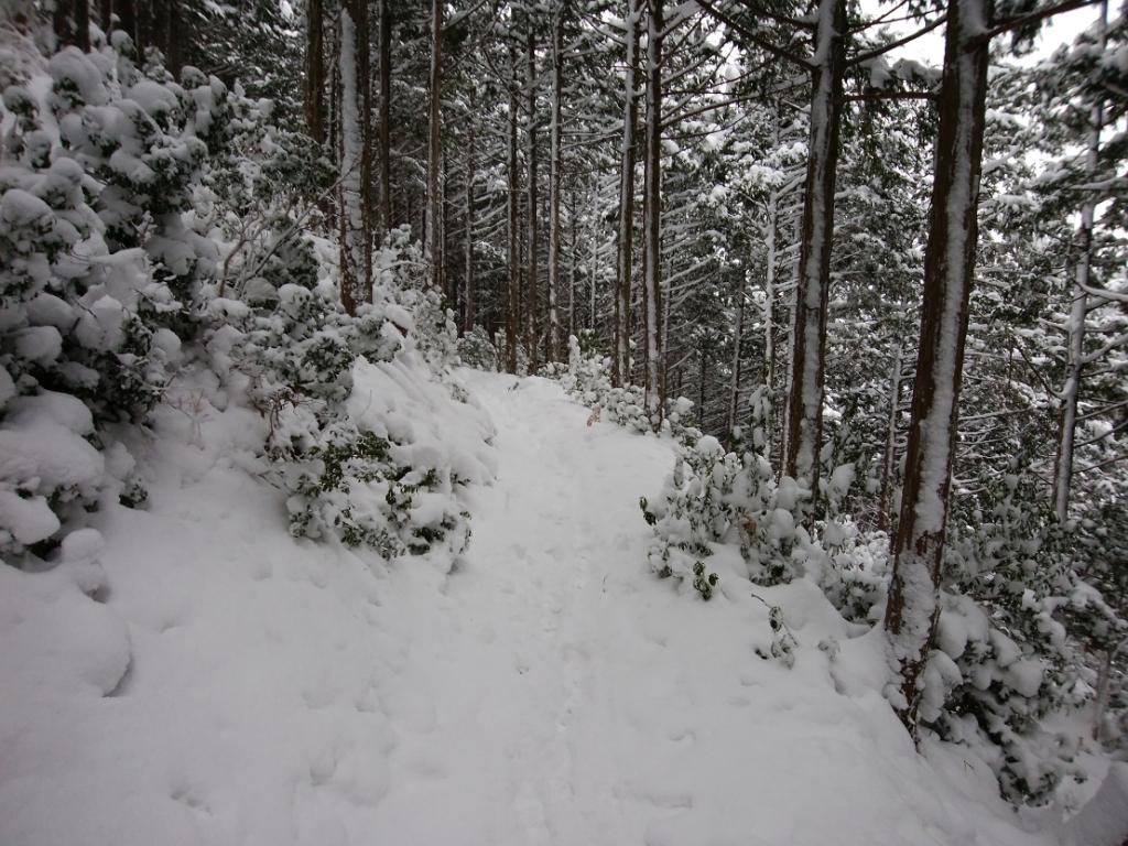 結構な雪の量だ