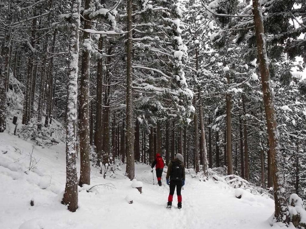 植林帯だけどこれだけ雪が積もってくれれば絵になる