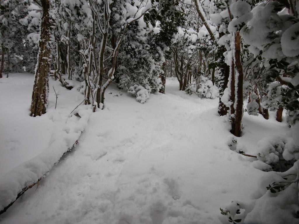 観音峰山の頂上を目指して登っていく。ここからは雪の量が一気に変わった