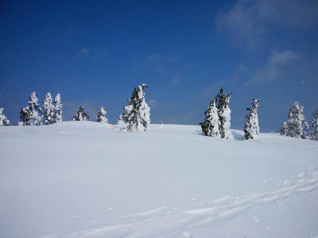 モンスター予備軍たち。もう少し雪が積もっていれば、これもすごかったんだろうけど、青空とこれが見れたので満足