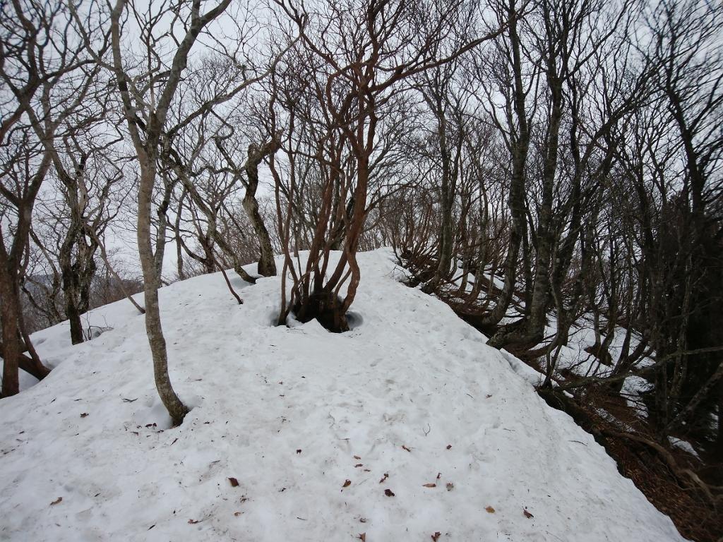 御殿山を目指して稜線を歩いていきます