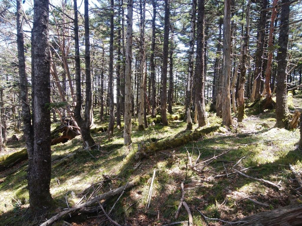 孔雀岳周辺はすごい苔地帯になっていたところがあった