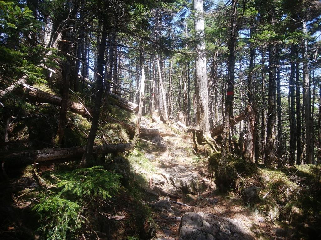 孔雀岳~仏生ヶ岳の奥駆道はまあ普通かな。ここからはあまり眺望がなかった