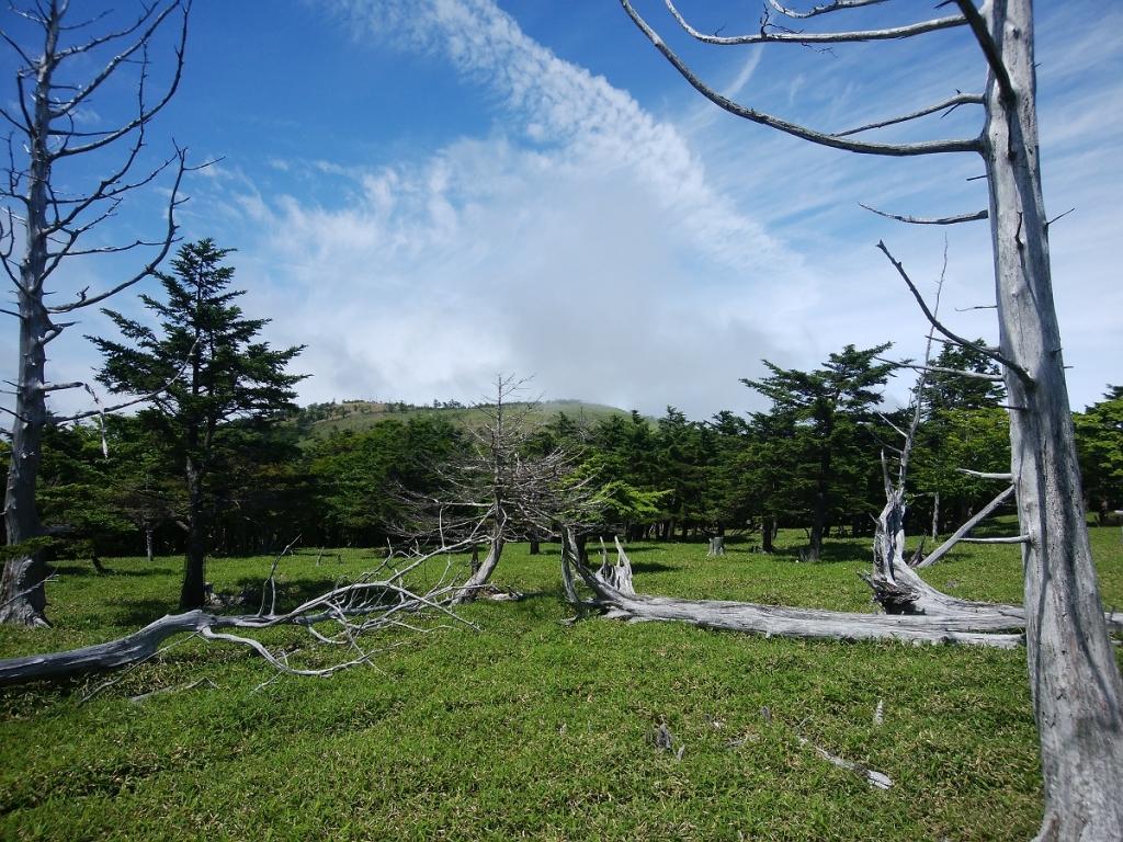 正木ヶ原に到着するとガスがすっかりはけて、青空がでてきた