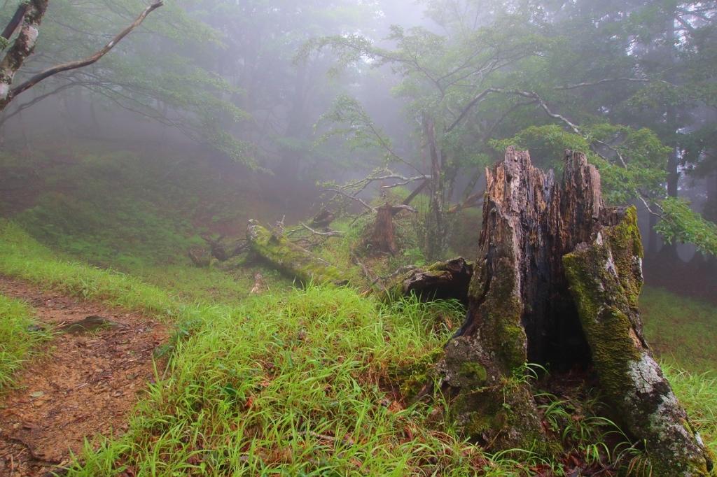 こういう折れた木と風景を見られるのも大峰の醍醐味