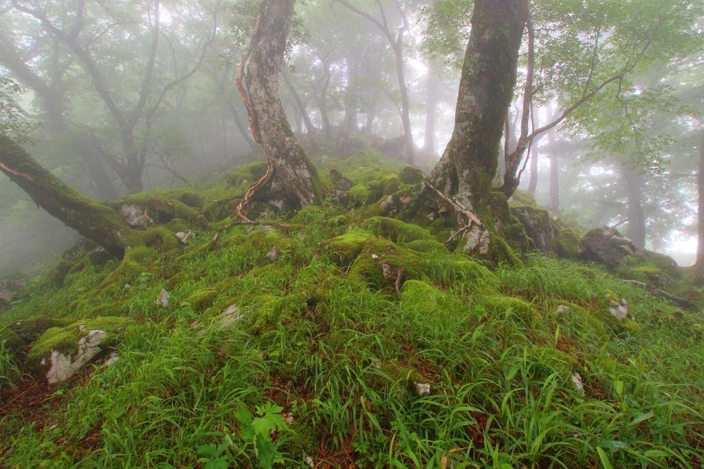 途中にある苔地帯。やっぱガスと苔はかなりいい感じ