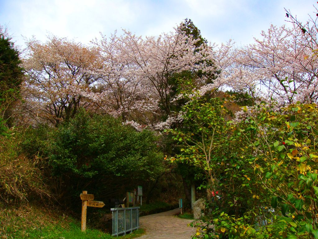 二上山(桜景色)2