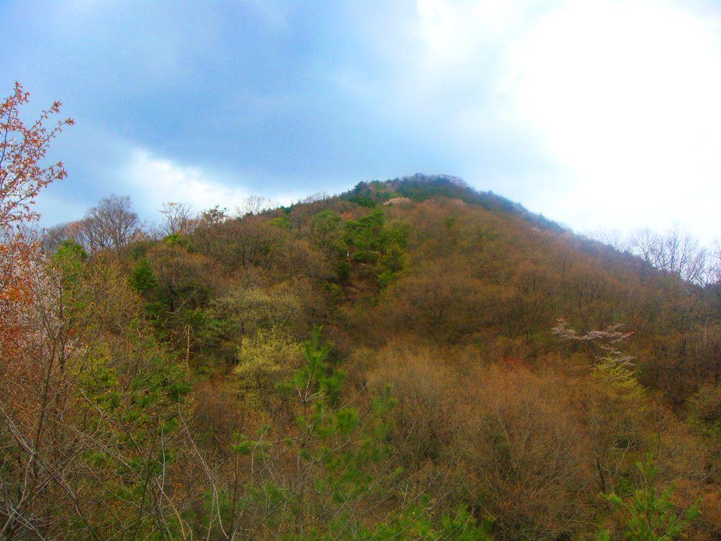 二上山(桜景色)4