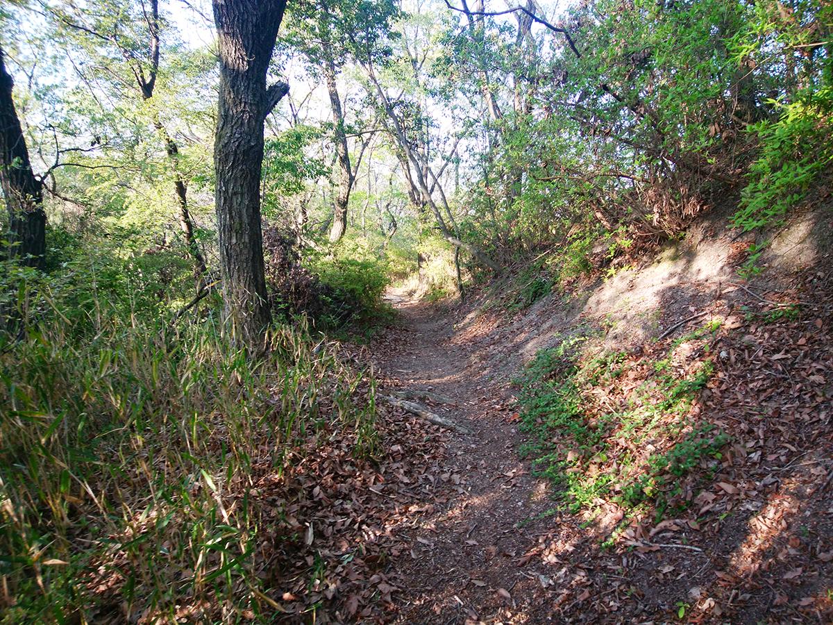 一蓋被の嶺ルート2